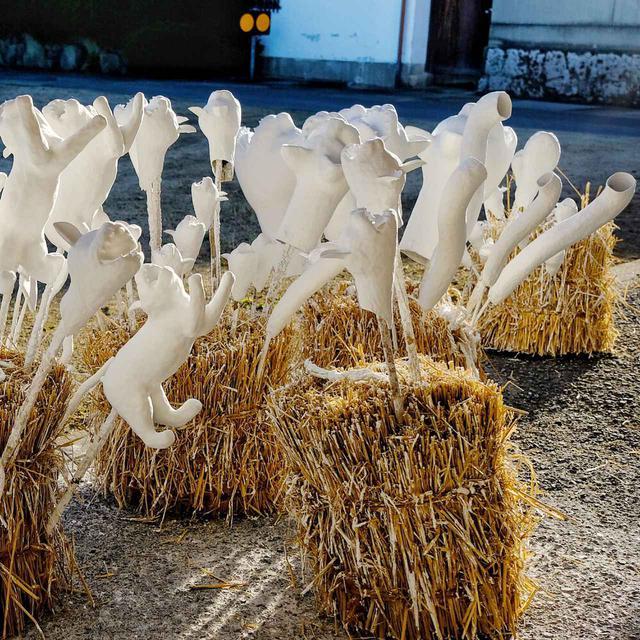 画像: 藁を束ねたものに串で刺し、天日干しで乾燥中。