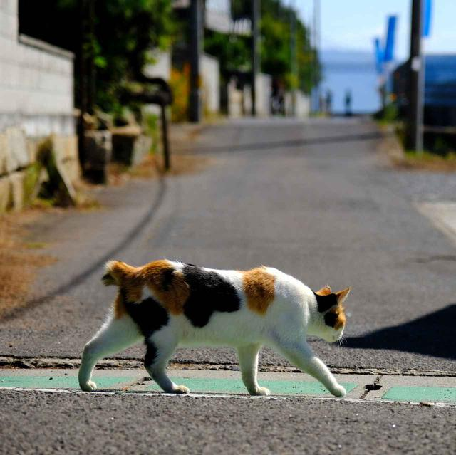 画像: 島内にはたくさんの猫たち。人慣れしていて、触らせてくれる子もいます。