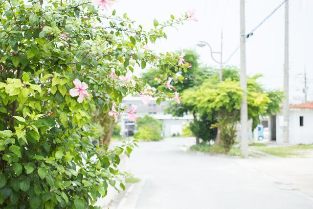 画像5: 沖縄そばの人気店「やん小(やんぐぁー)」