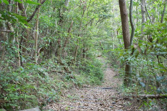 画像: ラムサール条約登録地、宇江城岳(うえぐすくだけ)の渓流と湿地