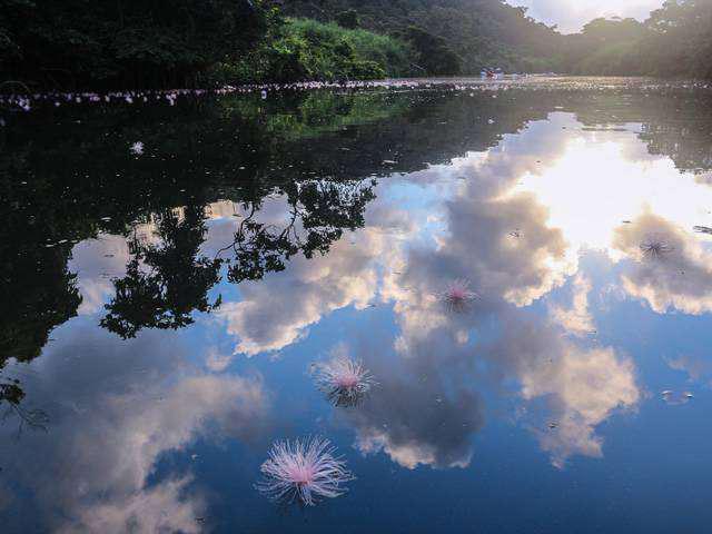 画像3: 西表島でしかできない夏旅へ!