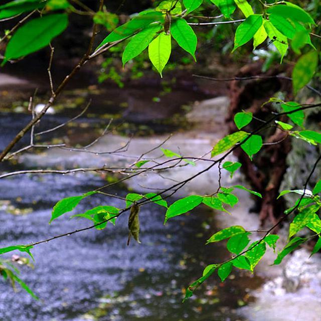 画像: 道に沿って流れているのは雄樋川(ゆうひがわ)。海まで続いています。この川があったからこそ旧石器時代にこの地帯が居住区になっていたのかも。