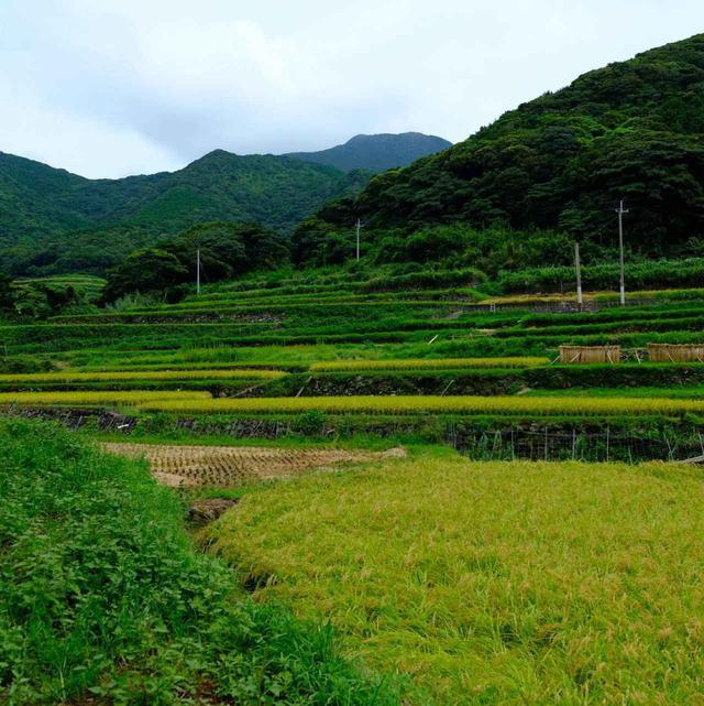 画像: そしてここからは「春日地区」へと車を進めます。のどかな田んぼの風景ですがここも世界遺産の構成資産の一部です。