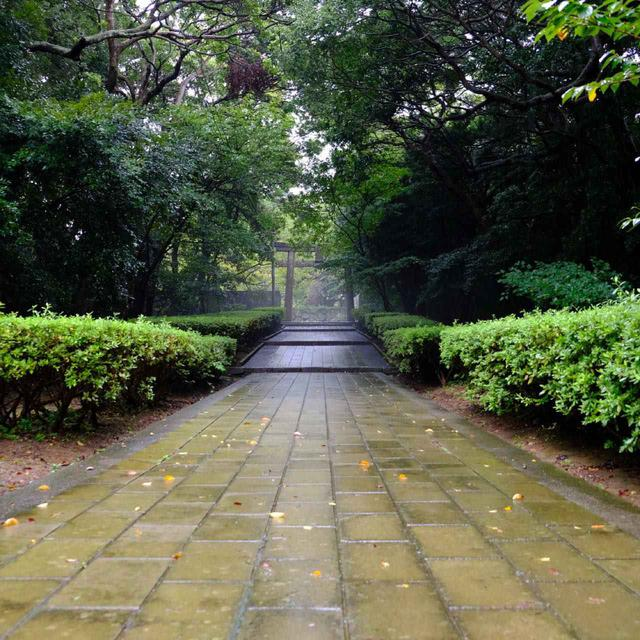 画像: 朝の神社への道はすがすがしく気持ちがいい空気です。