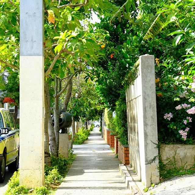 画像: 瑞泉酒造に向かう道。南国の植生に囲まれる静かな街、首里崎山町。