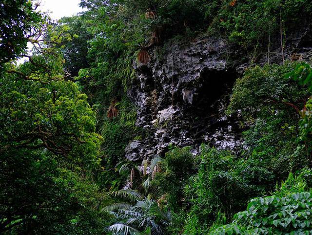 画像: この場所全体が鍾乳洞の天井部分が崩れてできた谷間で、現在はそこに樹木が茂って今の姿になったとの説明。スケールが大きすぎて想像を超えます…。 一年中暑いイメージがありますが実は気温が低い日もある沖縄。暑さにも寒さにも耐えられる、葉や茎が固くて強い植物が多いと感じます。