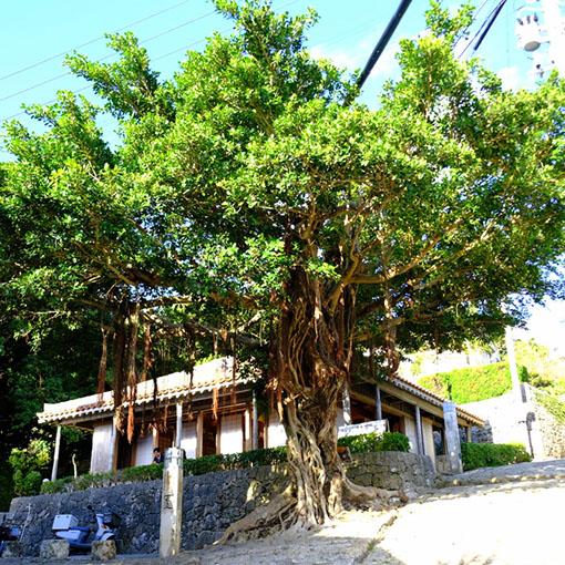 画像: 途中まで下ったところにあるガジュマルの木。隣には無料休憩所があります。