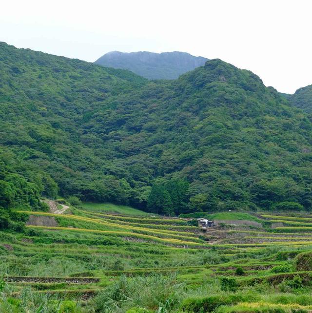 画像: 棚田の向こうの山のさらに向こう、うっすらと見える高い山が「安満岳」。こちらも信仰の対象となっていました。