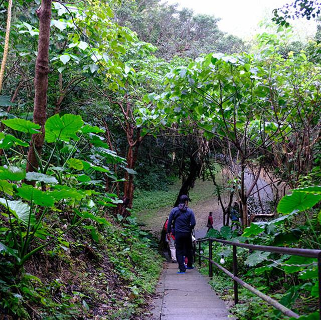 画像: 谷内はきちんと道が整備されています。雨も降っていましたが木々が傘の代わりをしてくれていました。