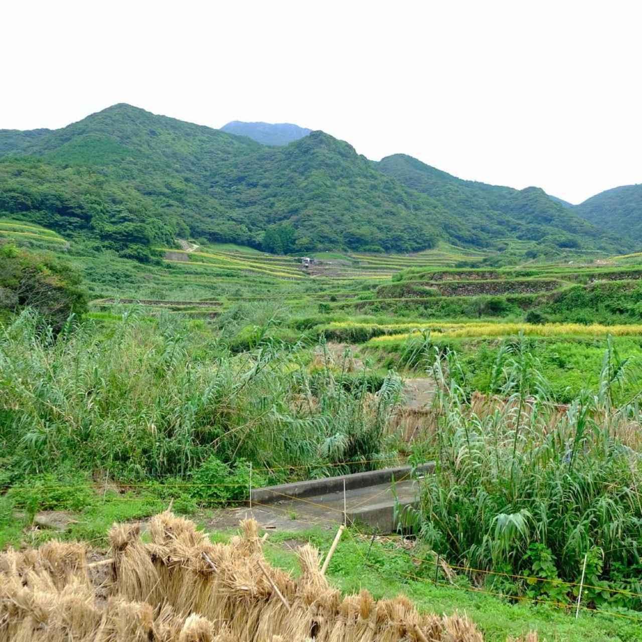 画像: あまりにものどかで日本のどこにでもありそうな里山の景色と、江戸時代に起こった数々の悲しい殉教の歴史とがどうしても頭の中でリンクせず…。彼らが自分たちの信じるものを必死に守り抜き、それを伝えた250年間。聞けば聞くほど難しく、そしてもっと色々お話を伺いたかったです。
