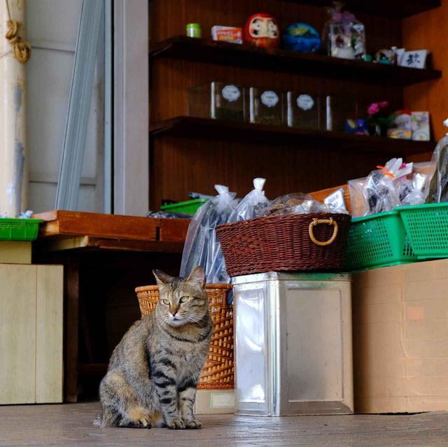画像: お店をしっかりと守る猫さんも登場。優しく人情味のある一角でした。