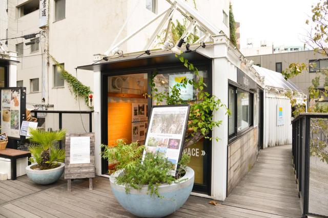 画像2: 庭を見ながらゆっくり過ごせる「そら植物園インフォメーションセンター&カフェ」