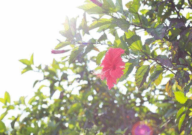 画像: 離島ライターが見つけた久米島の魅力。絶景・グルメ・人の温かさ