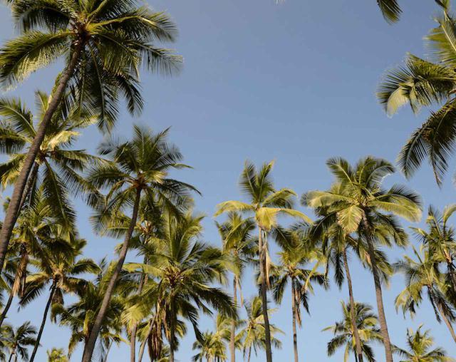 画像: ハワイ渡航歴100回以上のライターがすすめるコナ絶景スポット