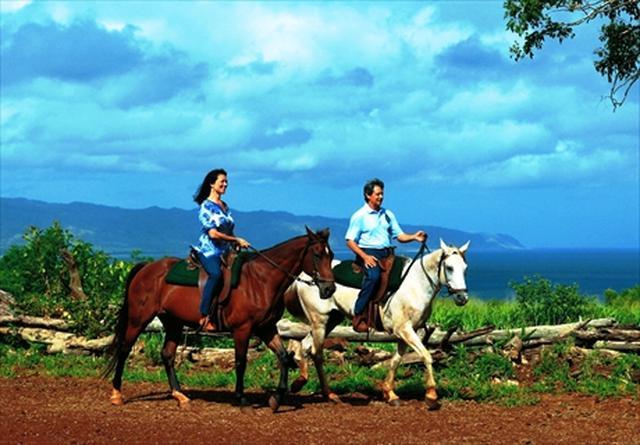 画像: 渓谷乗馬(90分)&ノースショア観光 - JALPAKハワイ