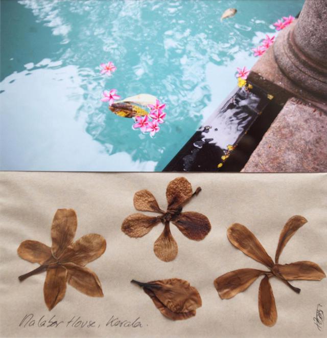 画像: 水に浮かんだ花びらの写真と、それを押し花にしたもので構成した見開き
