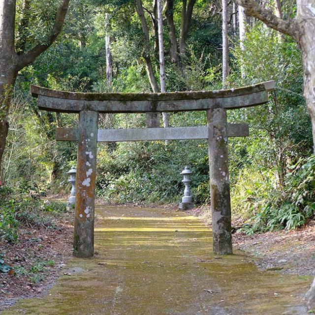 画像: 背の低い鳥居から苔むした参道を通り社殿へ。