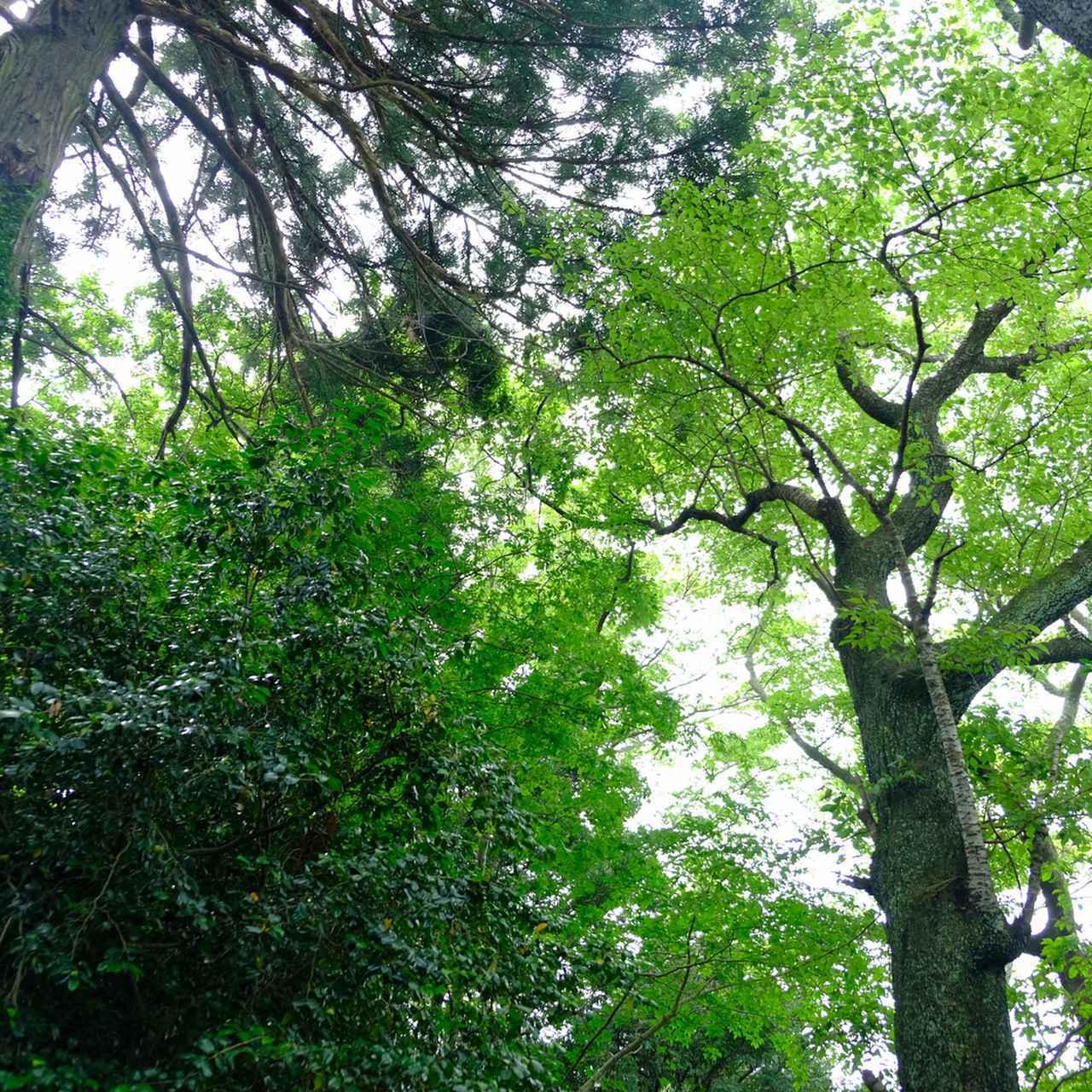 画像: 背の高い木々に囲まれ、木陰を進めるので涼しく感じます。豊かな植生を感じる深い森を歩いている感覚になれます。秋は紅葉が大変きれいだそうです!