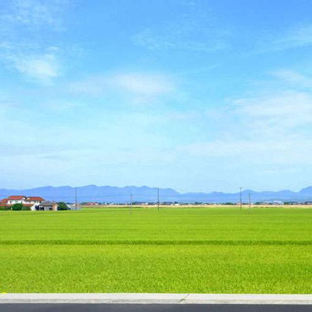 画像: 斐川平野の美しい田園風景。遠くに見えるのは北山です。