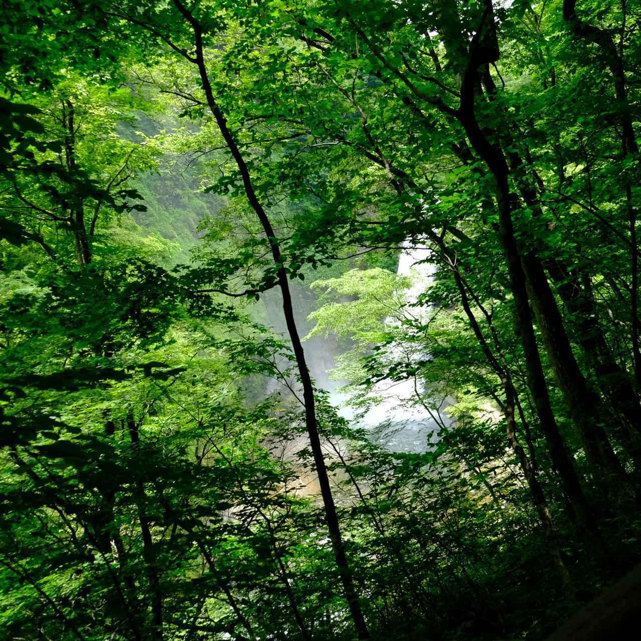 画像: 滝を間近で見るためには長くてキツい階段が待っています…!
