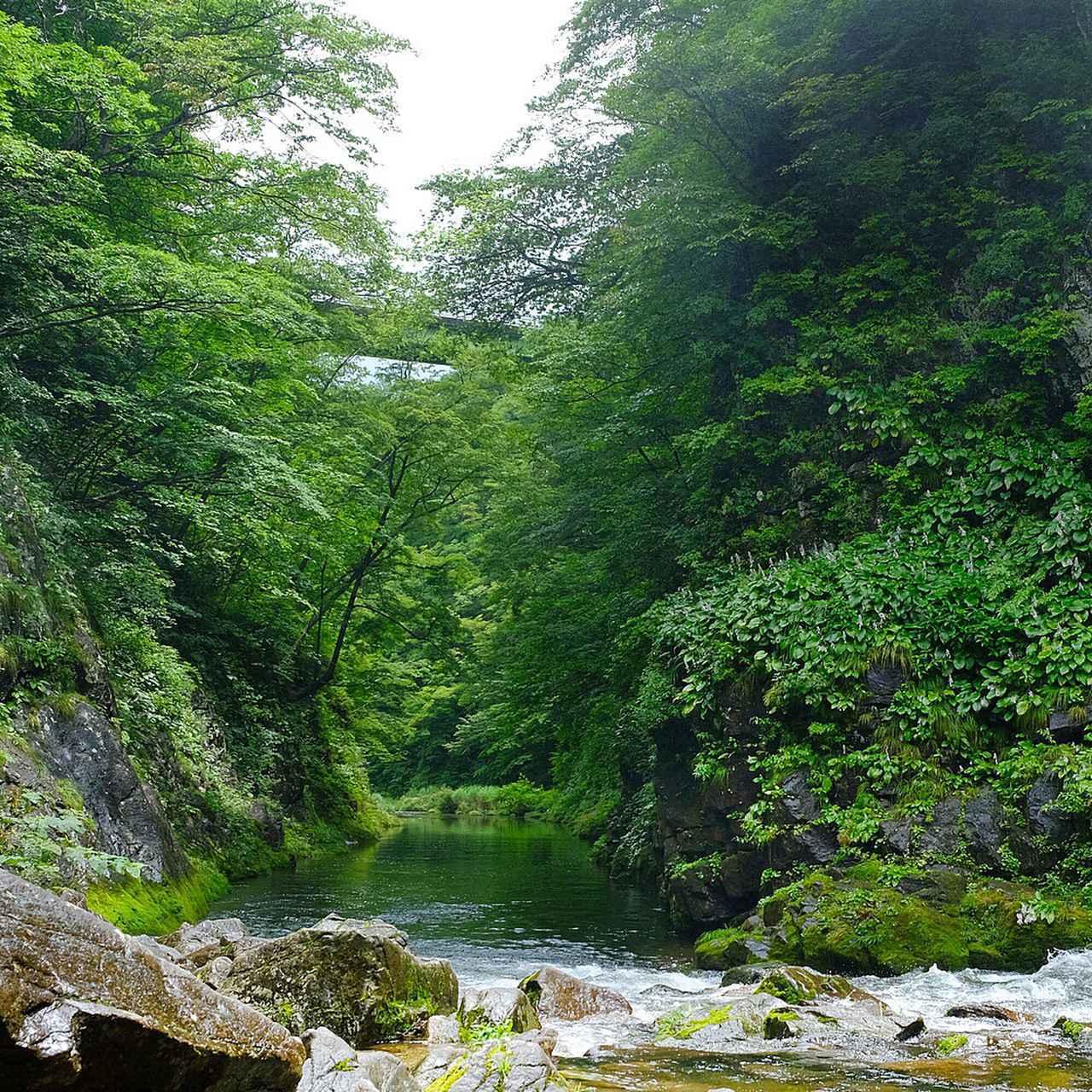 画像: 水に緑が映るリフレクションも美しかったですが、秋はさらに優美に、華やかに燃えるのでしょうね。