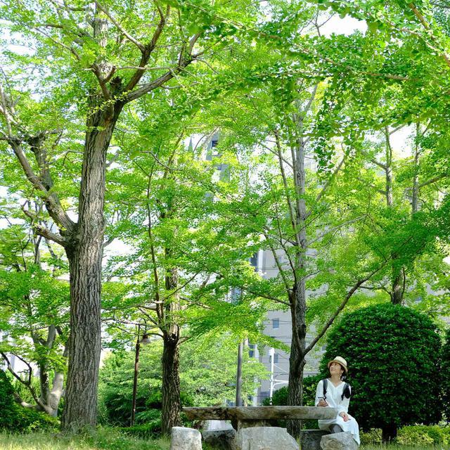 画像: その精神が受け継がれ、今でも花と緑がたくさん植えられた自然豊かな街の風景を作り出しています。