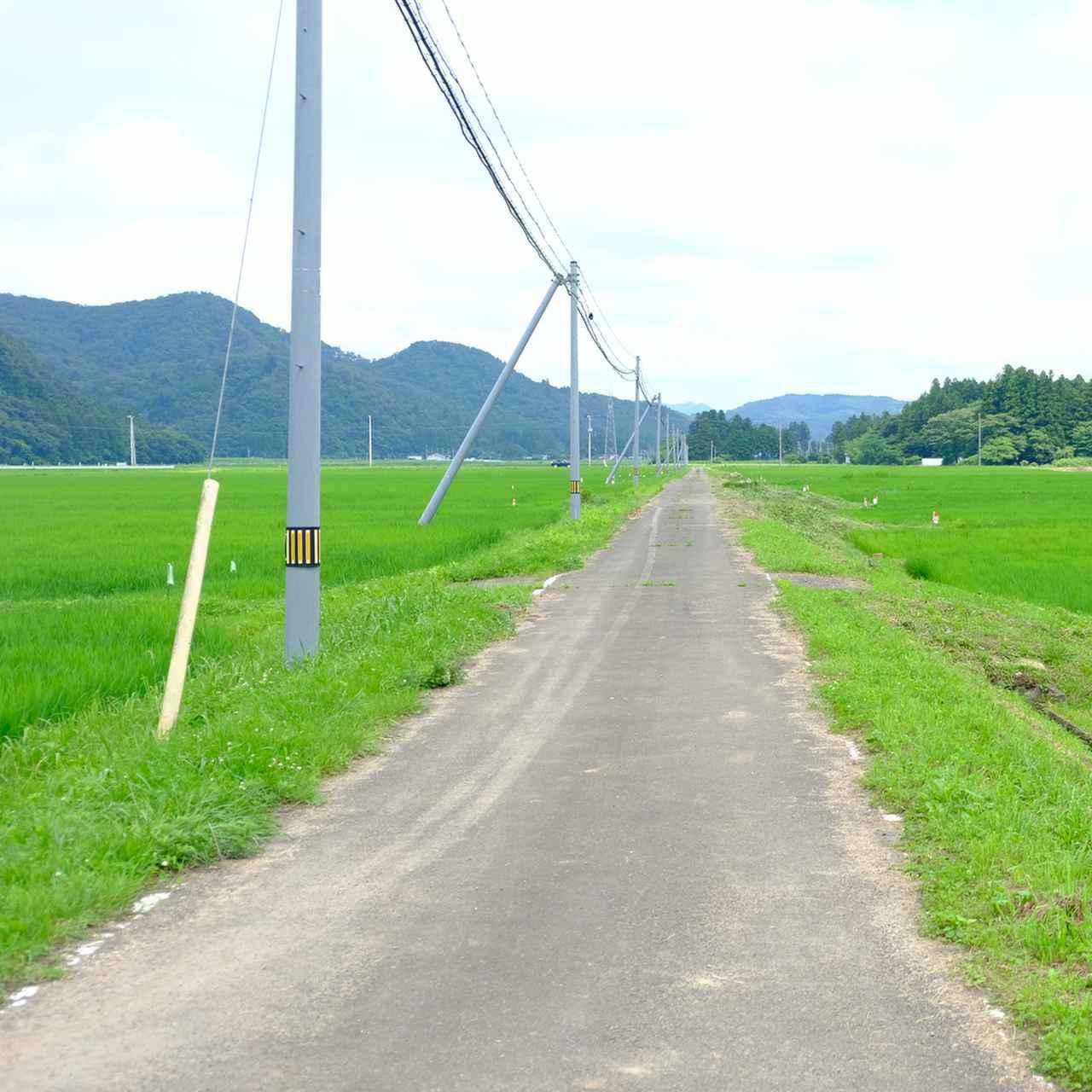 画像: 太田とうふ店を出てのどかな田んぼの一本道。私にとってはこれが非日常!米どころ宮城の「ひとめぼれ」に囲まれて、ペダルを踏む足にも力が入ります。