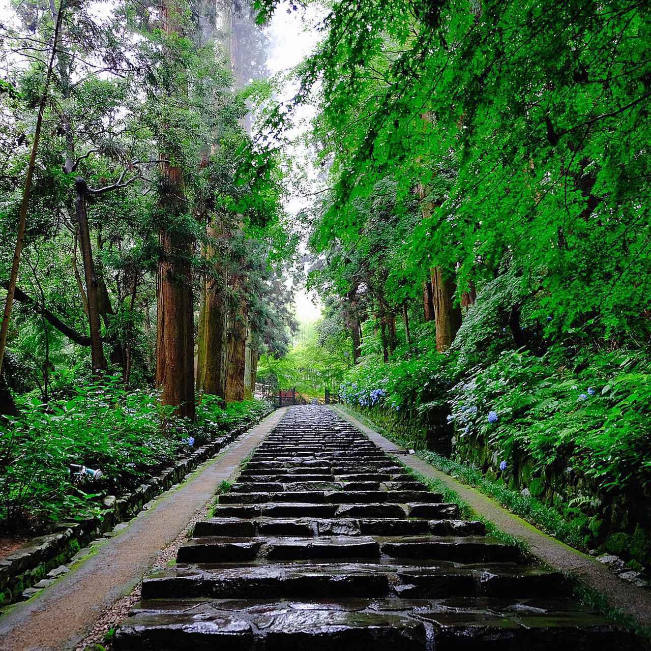 画像: 瑞鳳殿へと向かう参道は階段です。樹齢380年余ともいわれる杉の大木が左右に迎えてくれます。