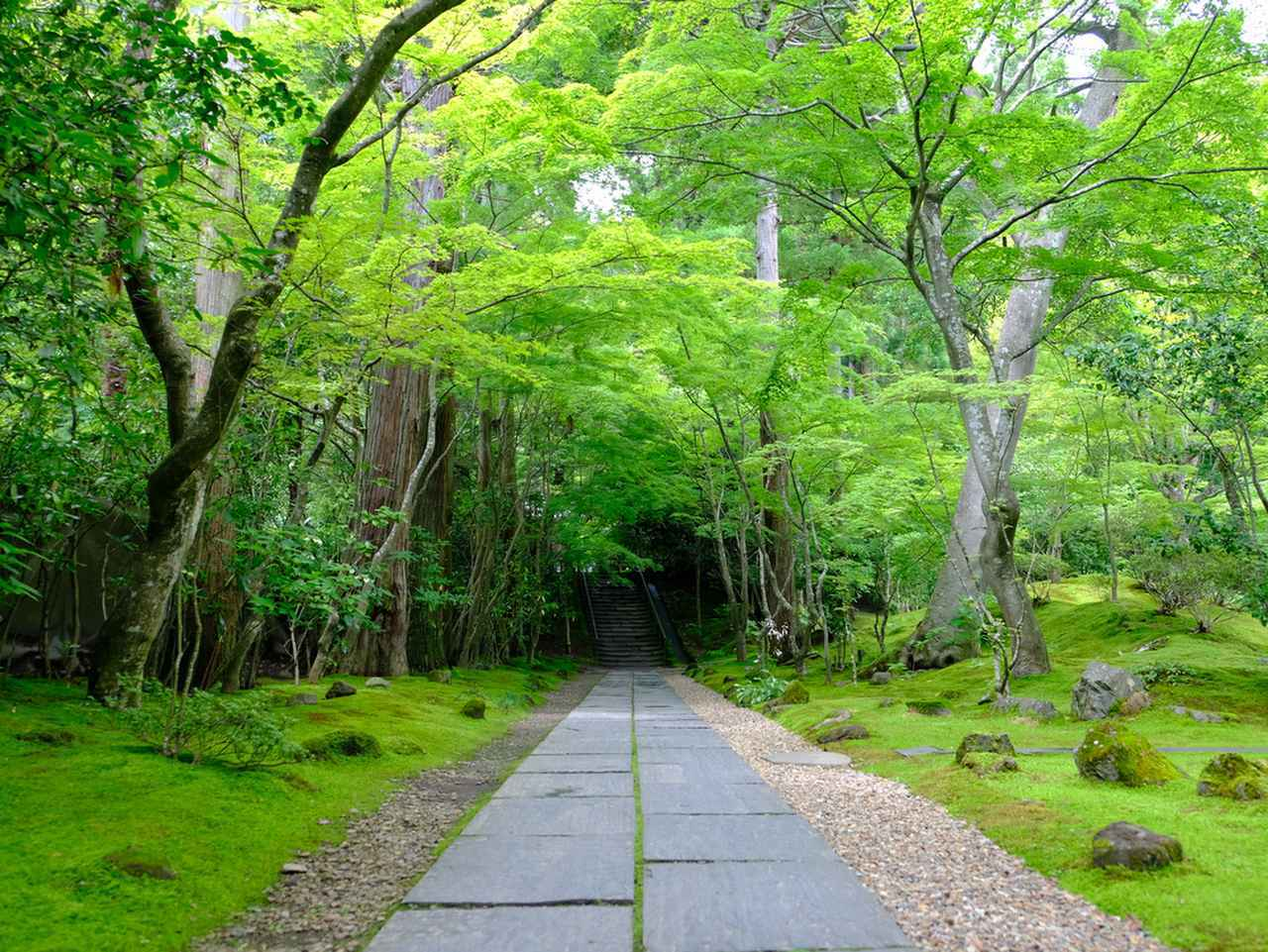 画像: 緑の光に包まれるお庭。「静」の空間でした。