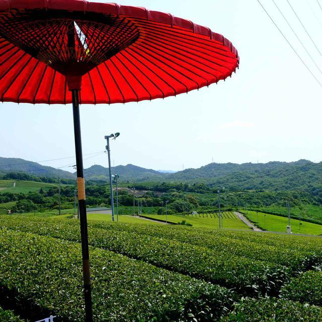 画像: 茶畑の脇で即席のカフェ試飲スペースを作っていただきました。