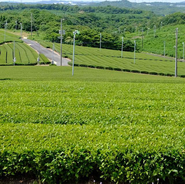 画像: 宇部はお茶。そんな話を耳にして、この旅の中でお茶の街=宇部を実際に体験しに出かけます。朝から快晴で嬉しい~。