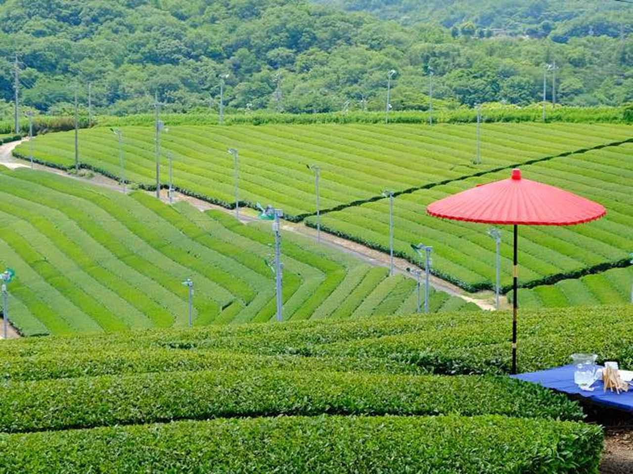 画像: 緑と現代アートの融合、そして誇れる産業がある街・山口県宇部市の旅