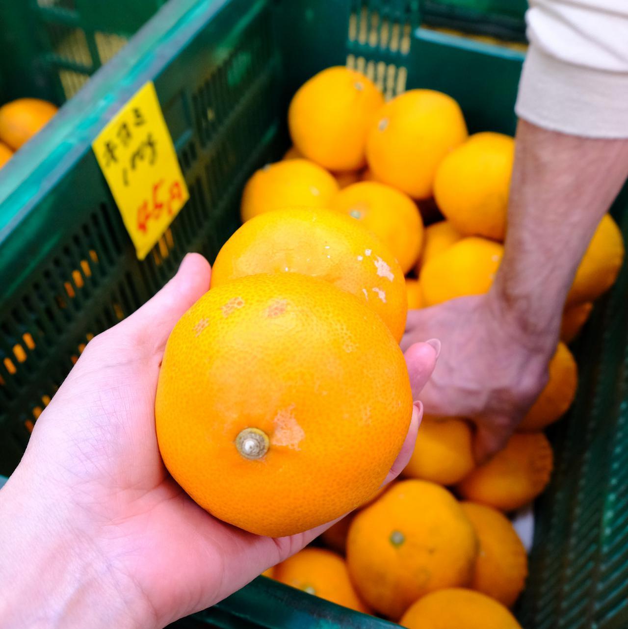 画像: 鳥津さんからも近い八百屋さんで柑橘を選んでもらいます。愛媛に来たら本場のものを旬のうちに購入したいと思っていたのです。