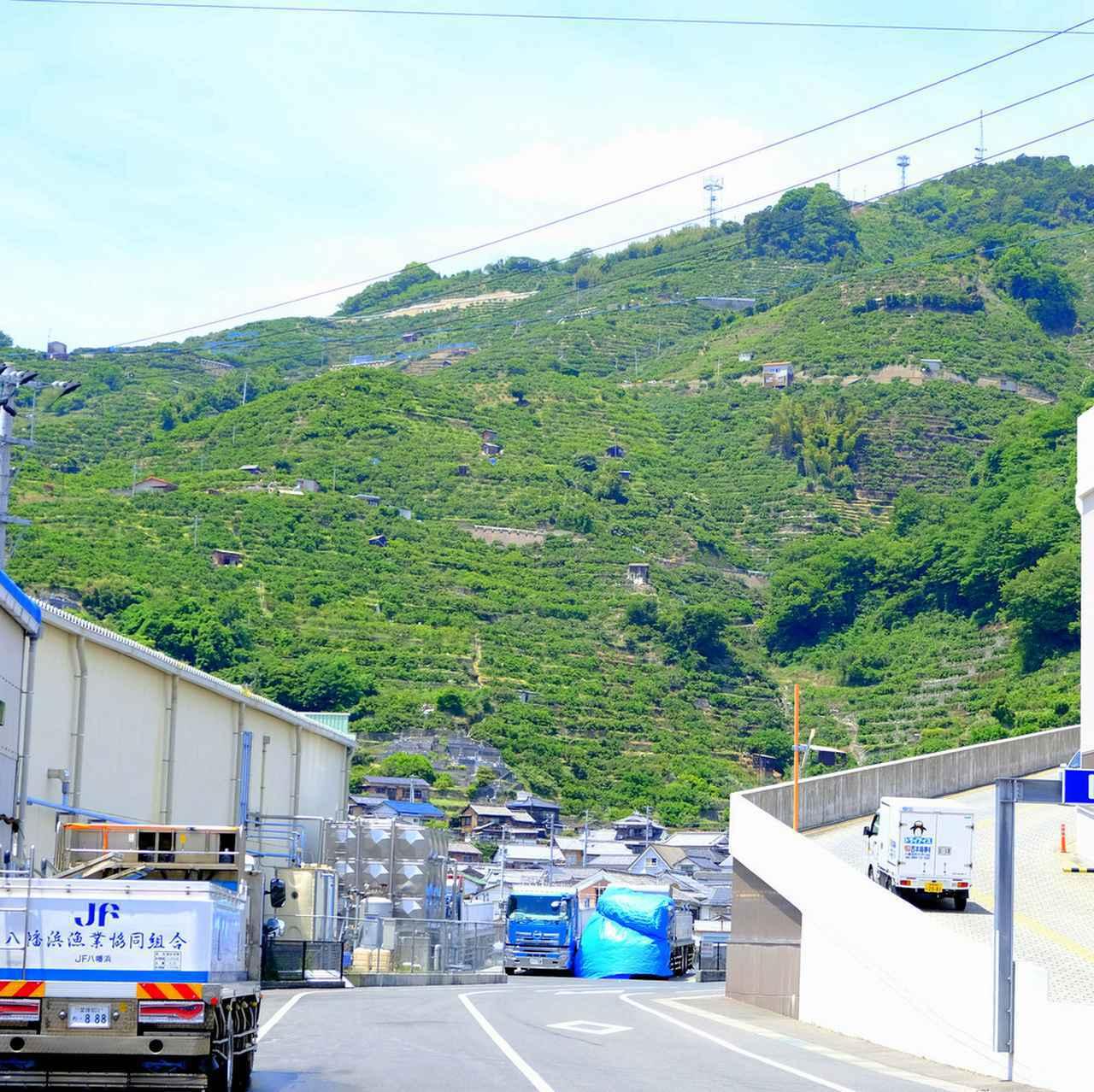 画像: 商店街をレンタサイクルで抜けて海のほうへ。港に向かったつもりが山へと出ました。八幡浜では緑の山と青い海とが接していて良い景観です。山は見渡す限り全部みかん畑!?