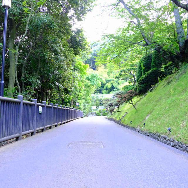 画像: 洋館までの道も緑濃く美しいです。