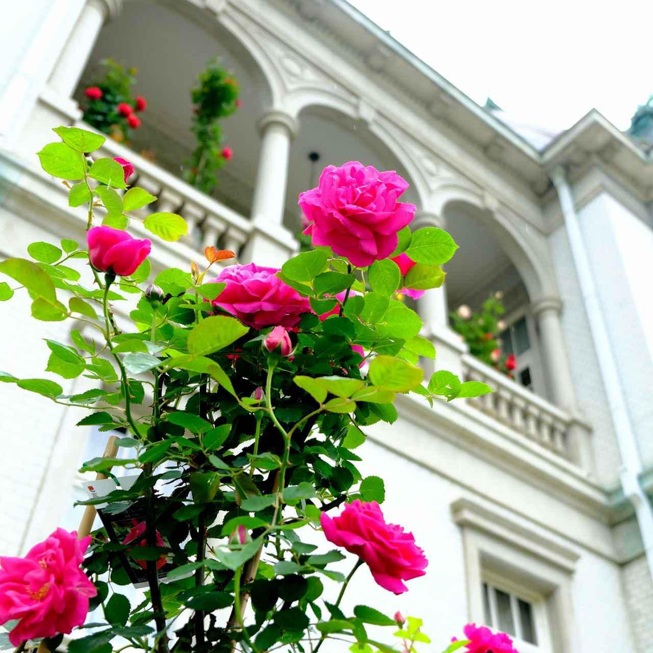 画像: この日は毎年恒例の「バラ展」が開催中。朝から多くの人で賑わっていました。