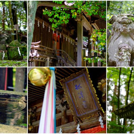 画像: 鬱蒼とした森と苔の大地が広がります。手つかずになっていることが心地よく、自然と一体になった古社です。