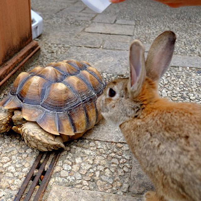 画像: うさぎと亀のレアショット。SNSで話題になりそうな写真を撮影できるかも?