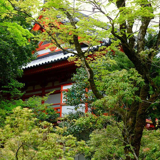 画像: 琉美園からは先ほどの金堂華王殿も見えます。ちょうど裏側を通り反対側まで抜けます。ここまでが特別拝観内のお庭です。