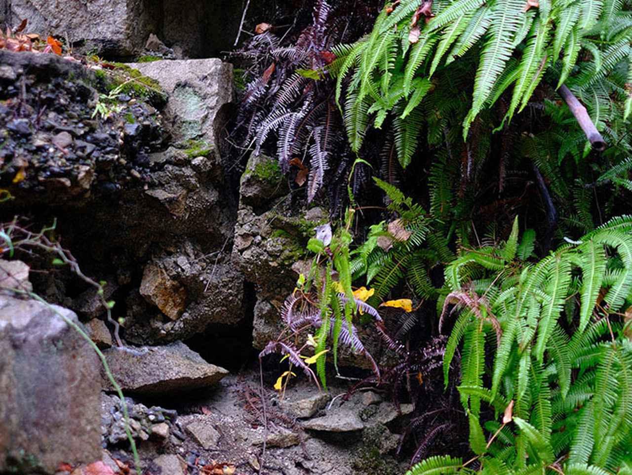 画像: 大久野島の自然の中にひっそりと残された戦争遺跡を見て回ります。