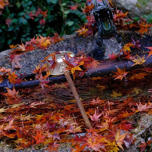 画像: これだけ立派なもみじがあるということは、夏は緑、秋は紅葉が楽しめそうですね。
