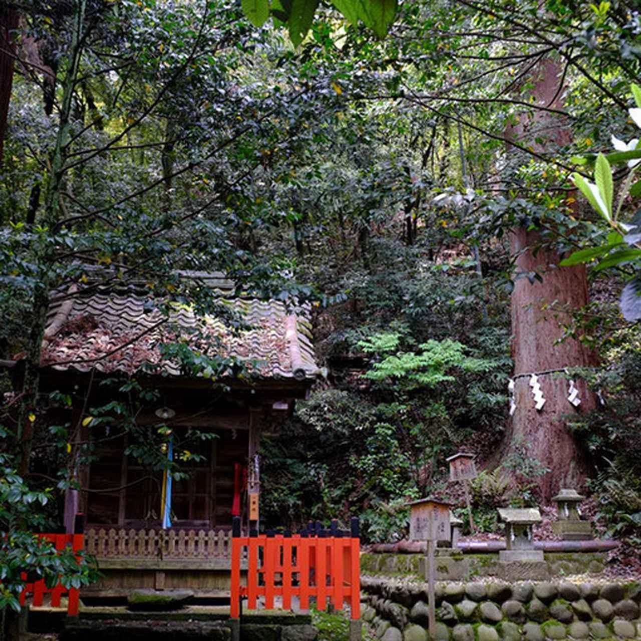 画像: ご神木、市指定天然記念物の大杉。横には八幡神社が並んでいます。