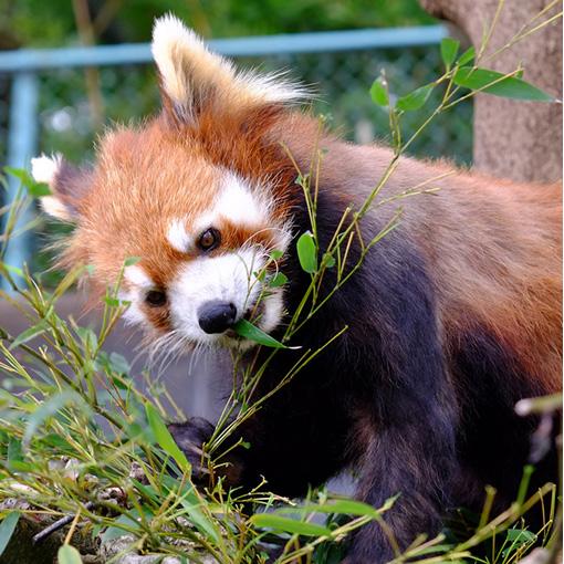 画像: 直接食事風景を見ることが出来たり、遊んでいる姿などをオリ越しでなく見ることが出来る貴重な動物園です。