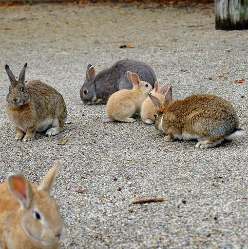 画像: ウサギコレクション