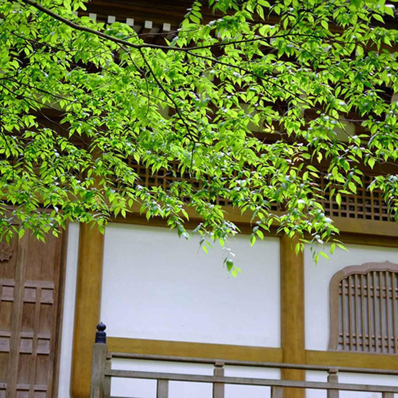 画像: 四季折々に美しい姿を見せてくれそうです。自然と建築物が溶けあう場所です。