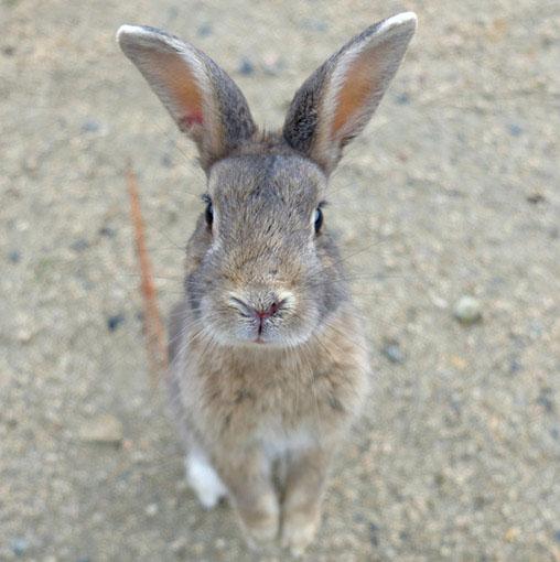 画像: 「ウサギの島」とも呼ばれる大久野島。