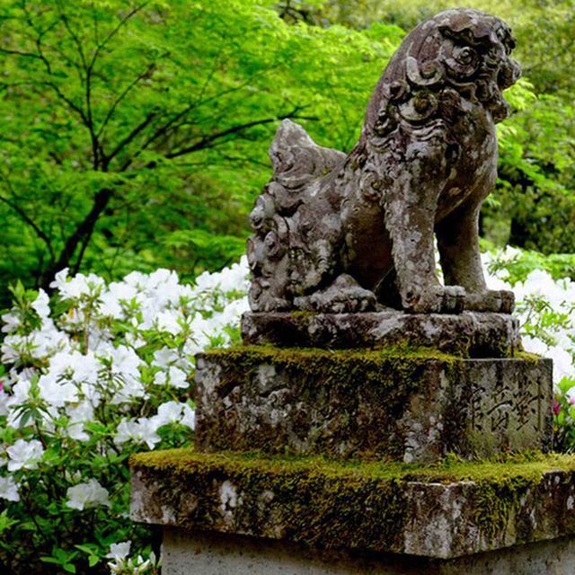 画像: 面白いなと思ったのは、ここはお寺なのに入口に狛犬がいることです。また、ここはお寺風に「本堂」とは呼ばず「本殿」。神仏習合していた名残なのでしょうね。