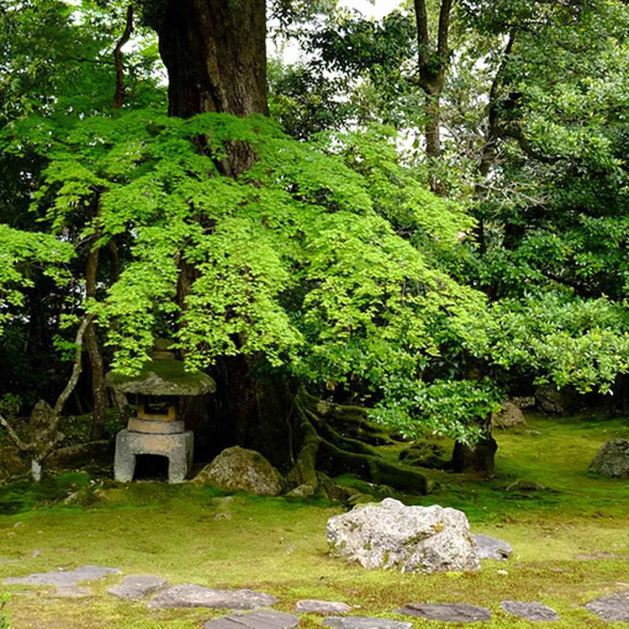 画像: 書院から見た、灯篭、庭石などを使い、苔を配置した庭。ここでSNSでもしながらぼーっとしていたい気分。