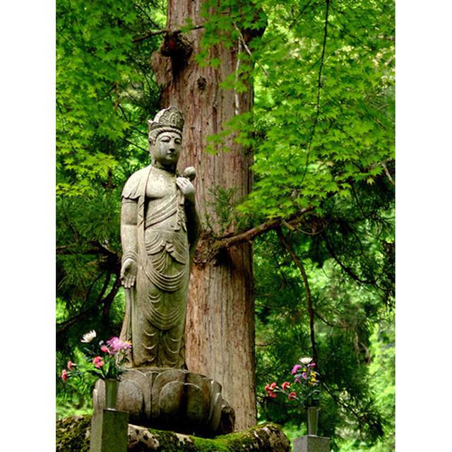 画像: 大杉の脇で柔らかい表情でたたずむのは観音菩薩像。