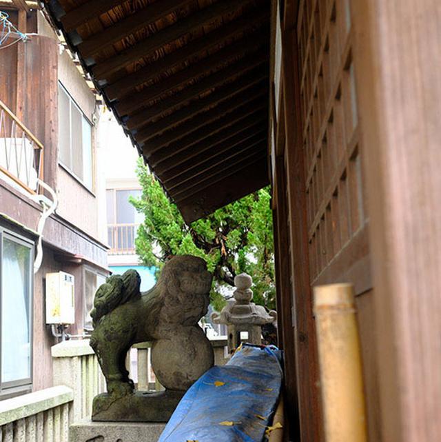 画像: この住吉大神宮は狛犬が社殿よりも後ろにあるという不思議な神社。狛犬だけ動かしたのか社を前に出したのか、元々こうだったのか